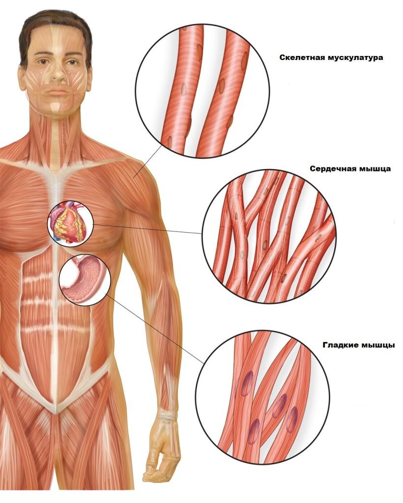 быстро повысить холестерин в крови