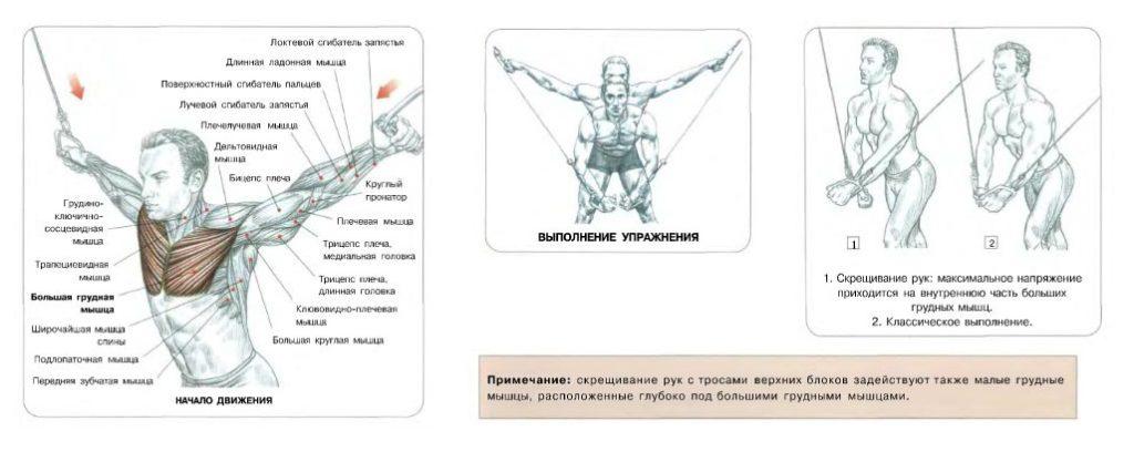 Выполняя сведение, оставляйте руки немного согнутыми в локтевых суставах. Нарушение этого правила приводит к травмам суставов и смещает часть нагрузки с грудных мышц на трицепсы.