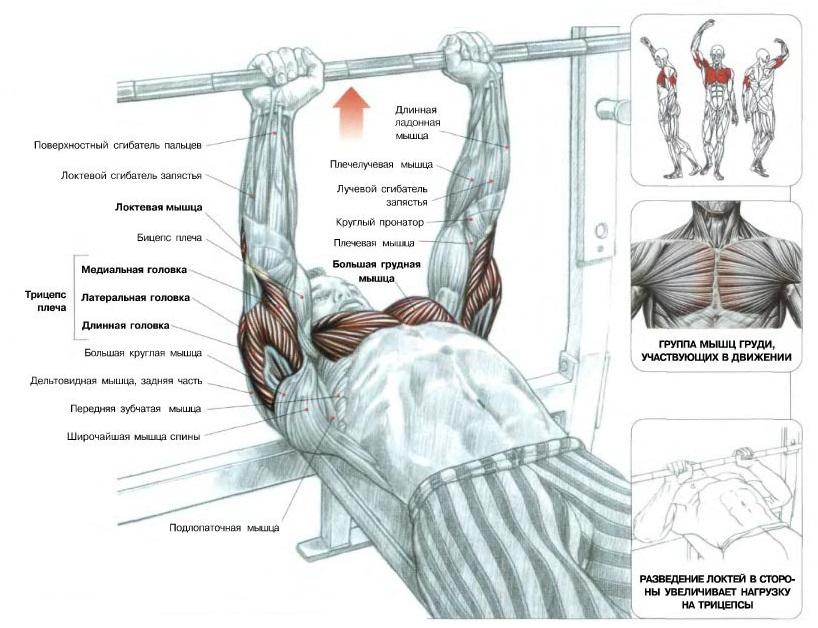 По мнению многих профессиональных атлетов, жим узким хватом является одним из лучших упражнений для развития трицепса.